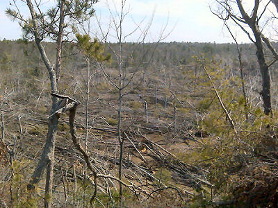 trees blown down in Nordhouse Dunes