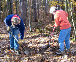 volunteers in forest