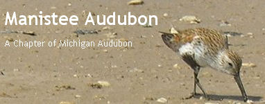 Manistee Audubon Blog Banner